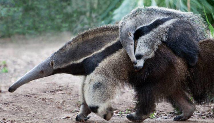 Winter Zoobilation at The Santa Ana Zoo