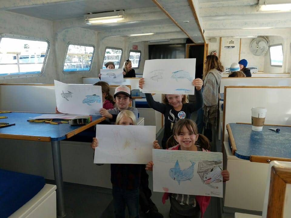 Wyland's Whale and Dolphin Adventure Art Lesson
