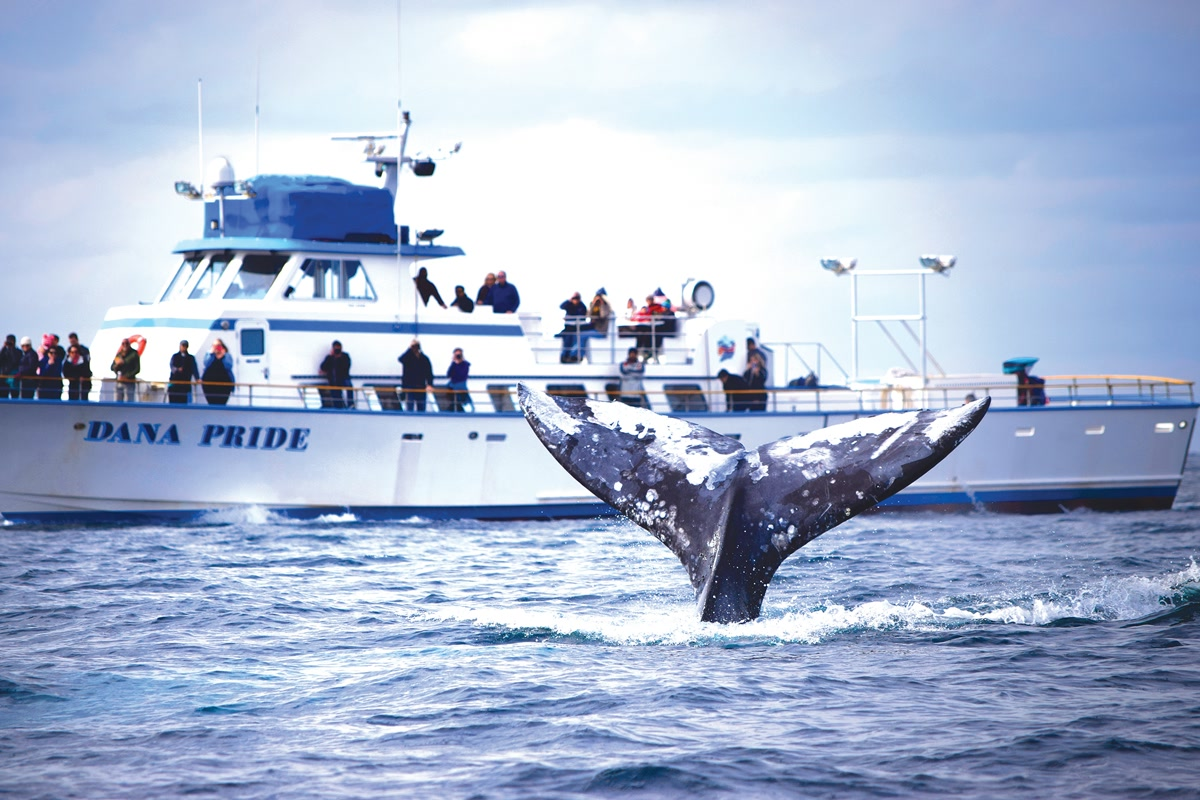 8 Hour Ultimate Whale Watch