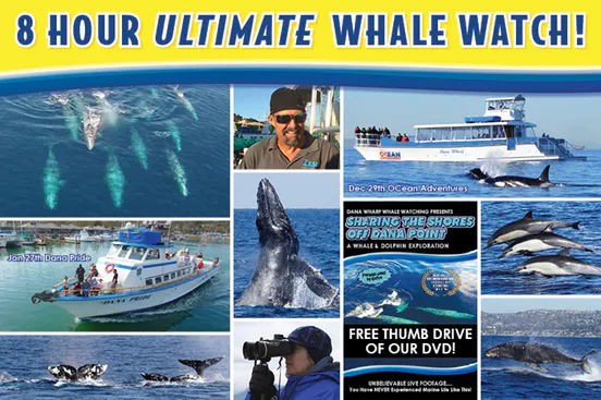 Ultimate Whale Watch Details