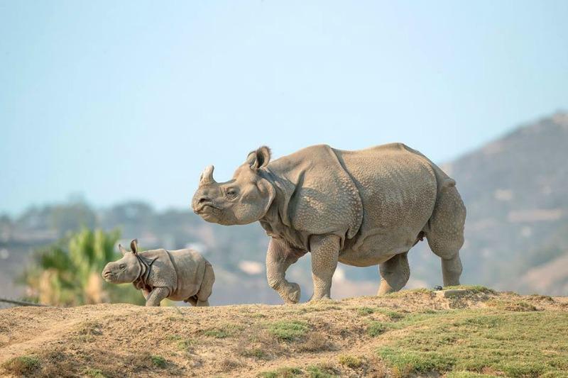 San Diego Zoo Safari Park 101 Things To Do In San Diego