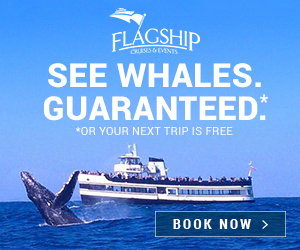 Flagship Cruises Whale Watching 300 x 250
