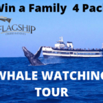 Flagship Whale Watching