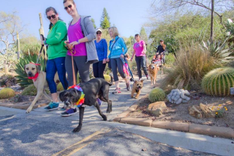 San Diego Botanic Garden Paw Walk 101 Things To Do In San Diego