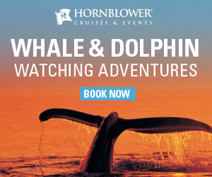 Hornblower 2018 Whale Watching 300 x 250