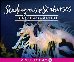 Birch Aquarium 2019 Seahorse 300 x 250