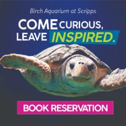 Birch Aquarium Summer 2021 250 x250